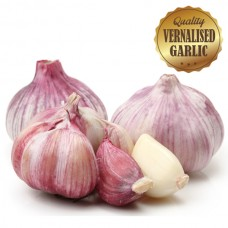 Vernalised Garlic - Australian Red 40mm - 60mm Bulb Diameter - 10KG